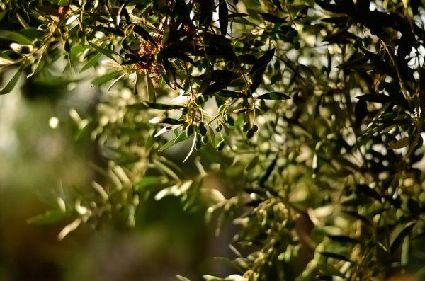 zelfdenrustsierbestrating olijf